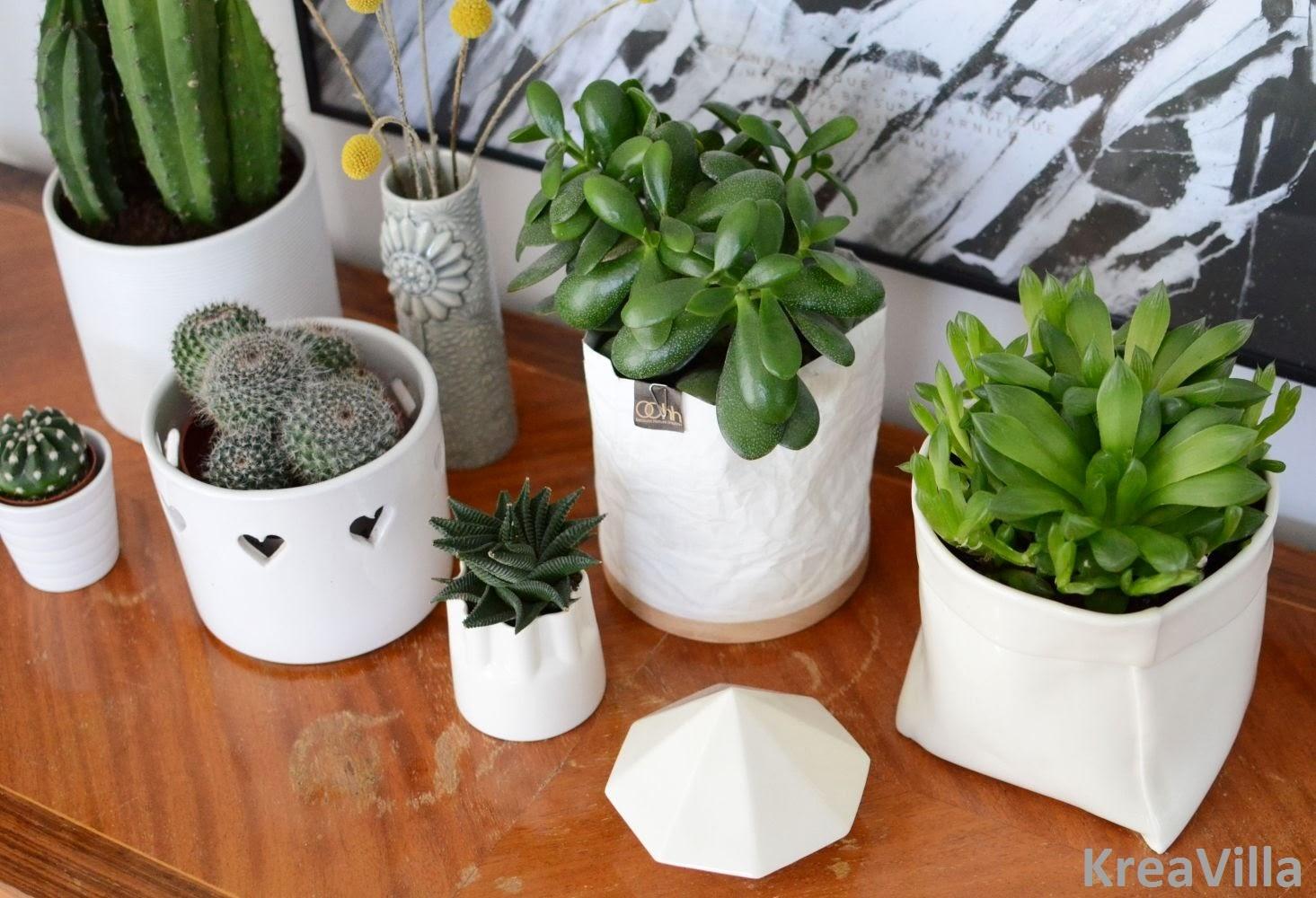 Potter planter